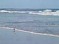 Gaviota en la Playa Valizas (Uruguay).JPG