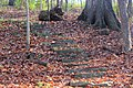 Gfp-iowa-bellevue-state-park-steps-on-the-hiking-trail.jpg