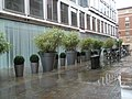 Giant flower pots in May's Court - geograph.org.uk - 1023938.jpg