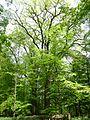 Gießen-Wieseck, Adam und Eva 01.jpg