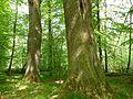 Gießen-Wieseck, Adam und Eva 03.jpg