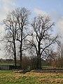 Gingelom - panoramio (2).jpg