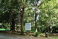 Gloggnitz - Eibenhain im Schlosspark.JPG