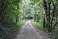 Gozd panovec (4).jpg
