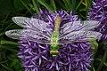 Grüne Libelle 2.jpg
