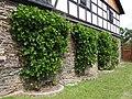 Grapes Neugernsdorf.jpg