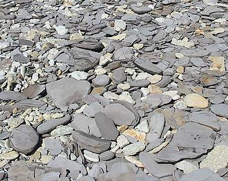 Argillite - Grey chunks of graptolitic argillite on Pakri Peninsula, Estonia; yellowish and white chunks are limestone