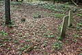 Graveyard at Manorville, New York 2018 04.jpg