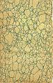 Green pattern - 12903051093.jpg