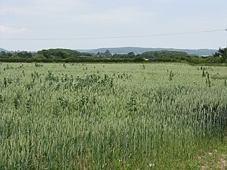 Lower Lyde - Image: Growing Crops Lower Lyde Farm geograph.org.uk 1376978