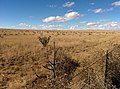 Guadalupe County, NM, USA - panoramio (1).jpg
