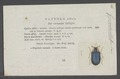 Gynandrophthalma - Print - Iconographia Zoologica - Special Collections University of Amsterdam - UBAINV0274 035 05 0032.tif