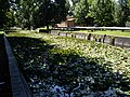 Hévíz. A tó csatornája - panoramio.jpg