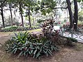 HK 中環 Central 遮打花園 Chater Garden flora green leaves n trees March 2020 SS2 58.jpg