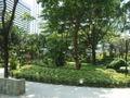 HK Chater Garden 417 forest.jpg
