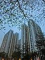 HK SPK 新蒲崗 night San Po Kong 彩虹道 Choi Hung Road evening Mar-2014 view 東頭邨 Tung Tau Estate Tai Tung House facades blue sky.JPG