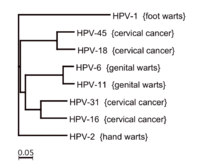 Non sexual transmission of high risk hpv