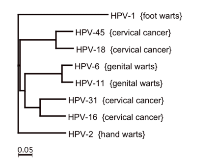 Human papilloma virus 16, 18 (genotipare)