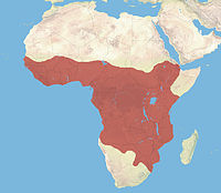 Habitat range of the African civet.jpg