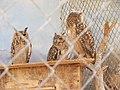 Hai Bar Yotvata Nature Reserve 37.jpg