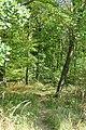 Hambacher Forst bei Morschenich DE 2018-09-09 I.jpg