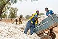 Harvesting African gold.jpg
