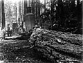 Hauling a fir log along a skid road, undentified logging operation, Washington, 1896 (KINSEY 2855).jpeg