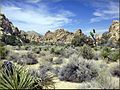 Hidden Valley, Joshua Tree NP 4-13-13e (25587269382).jpg