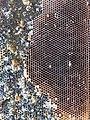 Honeycomb (10500766784).jpg