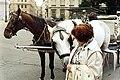 Horse-drawn carriage in Vienna.jpg