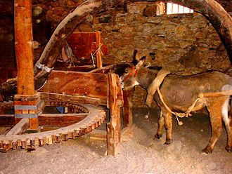 Horse mill - Donkey mill at La Alcogida Ecomuseum in Fuerteventura
