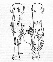 prostata bei frauen