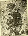Hunting and trapping stories; a book for boys (1903) (14782072832).jpg