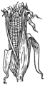 Husk (PSF).png