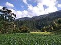 Hutan di Kawasan Girsang 1.jpg