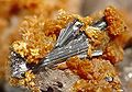 Hutchinsonite-Orpiment-mrz277b.jpg