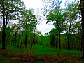 Ice Age Trail- Hickory Hill Conservancy - panoramio.jpg