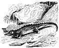 Ill dict infernal p0207-191 crocodiles.jpg
