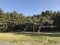 Imazu Pine Grove 6.jpg