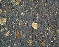 Impact breccia (Sandcherry Member, Onaping Formation, Paleoproterozoic, 1.85 Ga; High Falls roadcut, Sudbury Impact Structure, Ontario, Canada) 7 (40792885743).jpg