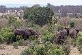 Impressions of Serengeti (130).jpg
