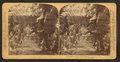 In the heart of a banana plantation, Hawaiian Islands, from Robert N. Dennis collection of stereoscopic views.png