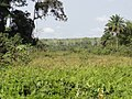 Inland valley rice culivation in Liberia - panoramio.jpg