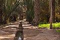 Inside the oasis Igrane (I).jpg
