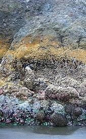 Foto de parte enakvigis rokon montrantan ke horizontalaj grupoj de malsama koloro kaj teksturo, kie ĉiu grupo reprezentas malsaman frakcion de tempo eluzita subakviĝis.
