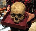 Istituto di anatomia patologica, museo, scheletri, cranio lombrosiano 02.JPG