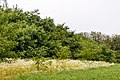 Izvoare – Risipeni, monument al naturii img 007. Linga Poiana Bocsa.jpg
