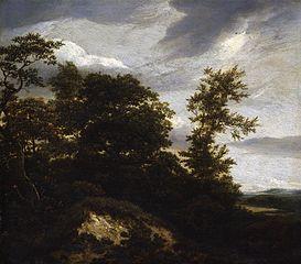Dunes paysage avec des arbres