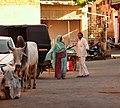 Jaisalmer (Rajastão), RTW 2012 (8405059949).jpg