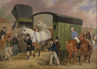 The Derby Pets: The Arrival